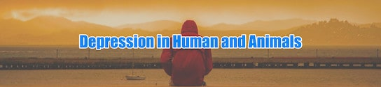 Depression in Human and Animals