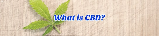What is CBD Header?